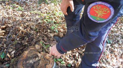 Truffa, furto e invasione di proprietà: due denunciati dai carabinieri forestali
