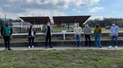 Ulivi in ricordo delle vittime Covid, il progetto dell'associazione Valentia a Cittanova