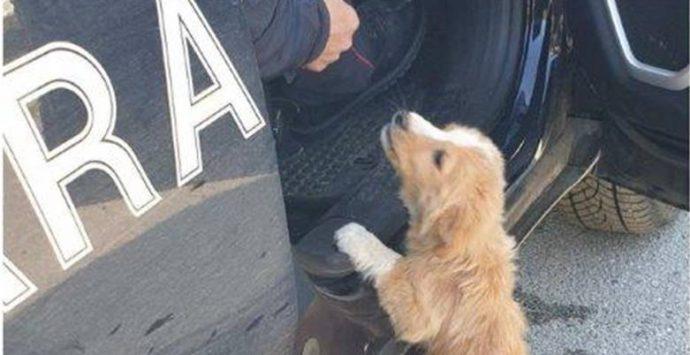 Mileto, cucciolo abbandonato salvato dai carabinieri forestali