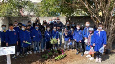 Vibo Marina, i bambini dell'Amerigo Vespucci piantano ulivi in ricordo delle vittime del Covid -Video