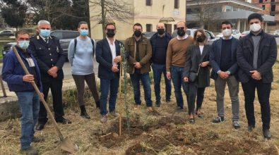 """A Ionadi nasce il """"Giardino della Memoria"""" per le vittime del Covid"""