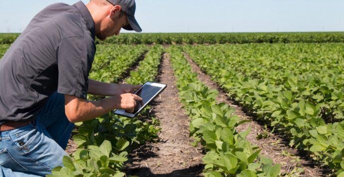 """Bando del Gal """"Terre Vibonesi"""" per l'ammodernamento delle aziende agricole"""