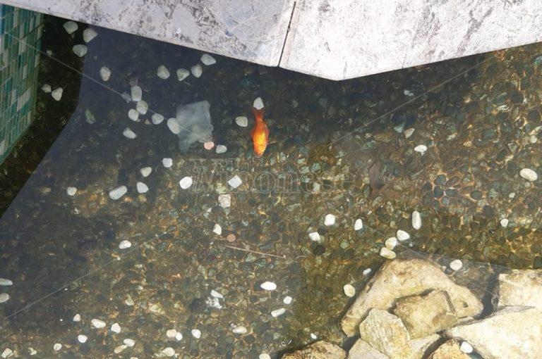Pesci rossi uccisi a piazza Municipio, l'Enpa: «Sporgeremo denuncia»