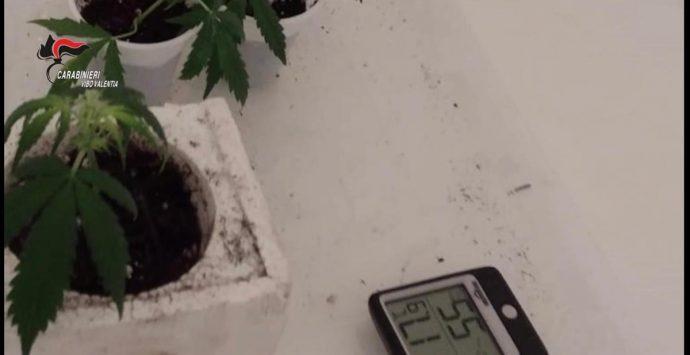 """Il cane Hero scopre una """"serra"""" di marijuana in un garage, un arresto a Vibo"""