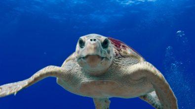 Giornata del mare, con l'app della Guardia costiera si potranno segnalare avvistamenti di specie protette