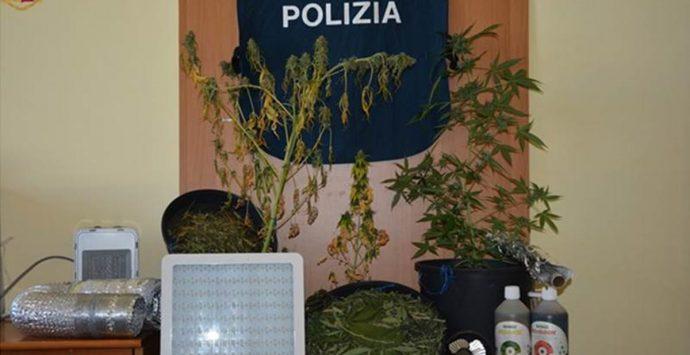Piante di marijuana in casa: pm chiede 6 anni, Tribunale di Vibo lo assolve