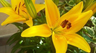"""Portosalvo """"borgo dei fiori"""": oltre 200 piante coloreranno la frazione di Vibo"""
