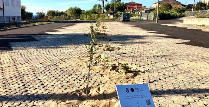 Ricadi, i bambini della primaria piantano 15 ulivi in ricordo delle vittime del Covid