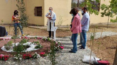 """Istituto industriale di Vibo, un nuovo alberello al """"Parco della memoria"""""""