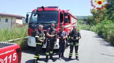Cagnolini in un dirupo salvati dai vigili del fuoco a Bivona