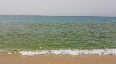 Nicotera Marina, torna la fioritura algale: la segnalazione di Arpacal