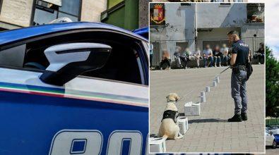 Nicotera, gli studenti incontrano la squadra cinofili e il cane poliziotto Malakeh
