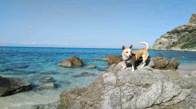 Tropea e Zambrone: No agli animali in spiaggia, ma è un'ordinanza della Capitaneria
