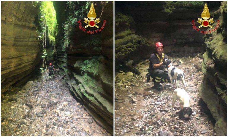 Cani finiscono in un dirupo a Polia: li salvano i vigili del fuoco – Foto