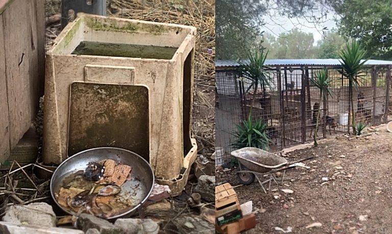 Sequestro cani a Sant'Onofrio, Enpa Vibo: «Detenuti in pessime condizioni»