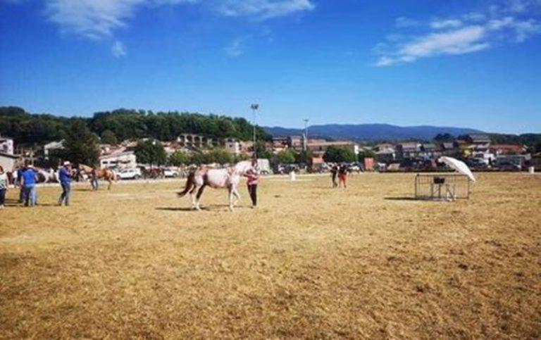 A Spadola il primo equiraduno: più di cento i cavalli da tutta la Calabria
