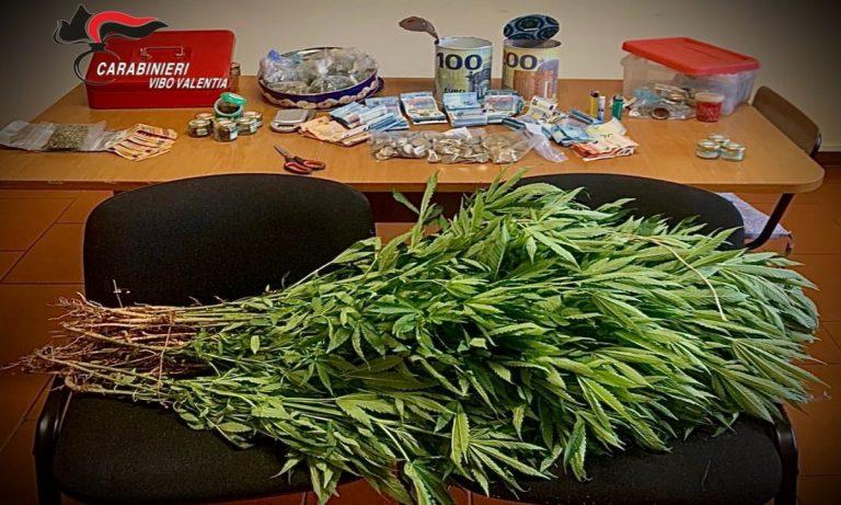 Marijuana e 5mila euro nascosti in campagna, un arresto nel Vibonese