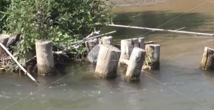 «Non sbarrate il fiume Mesima», il Wwf Calabria diffida la Regione – VIDEO