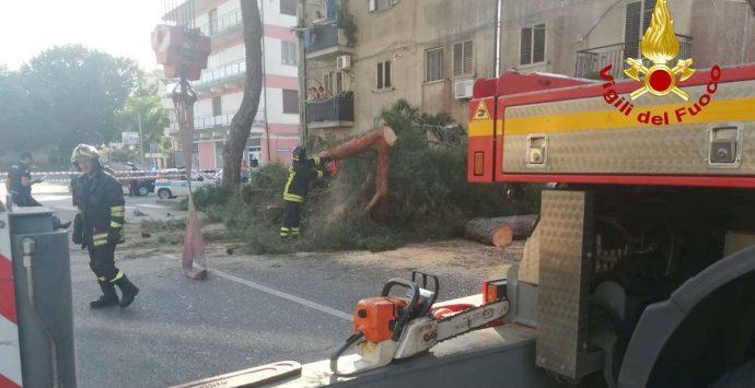 Albero caduto su auto a Vibo, Miceli: «Avevamo già segnalato il pericolo»