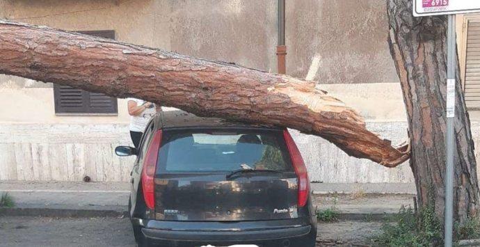 Pino marittimo si schianta su auto a Vibo, intervento dei vigili del fuoco