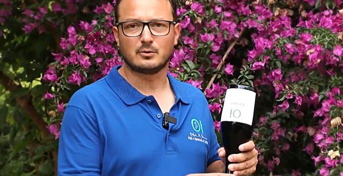 Il primo spumante calabrese da Zibibbo viene dal Vibonese: lo produce un giovane di Tropea – Video