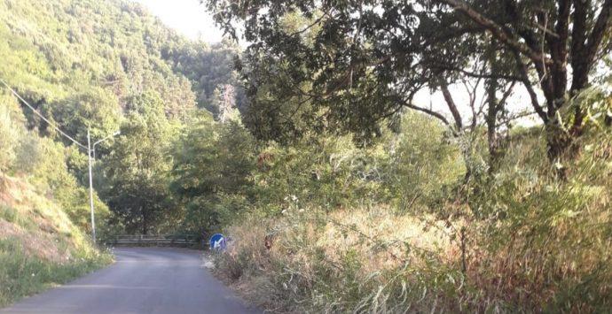 """Polia, strade abbandonate: ex consigliere """"striglia"""" la Provincia di Vibo"""