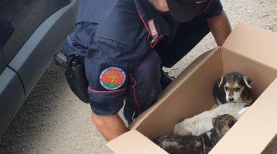 Monte Poro, tre cagnolini abbandonati messi in salvo dai carabinieri forestali