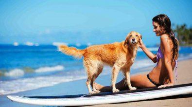 Divieto di animali in spiaggia, il Tar boccia il sindaco di Tropea