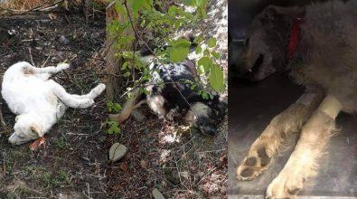 Strage di cani a Catanzaro dopo la tragica morte di Simona. I volontari: «Violenza inutile»