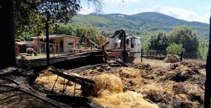 Incendio distrugge azienda agricola a Vallelonga