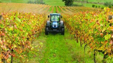 Gal Terre Vibonesi, ultimi giorni per partecipare al bando destinato agli agricoltori