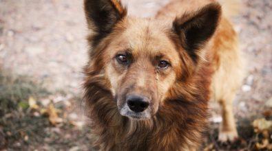 Due cani morti avvelenati a Vibo, l'appello Enpa: «Chi sa parli»